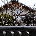 龍見院の梅
