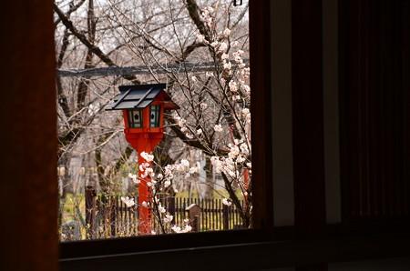 灯篭と桃桜(モモザクラ)