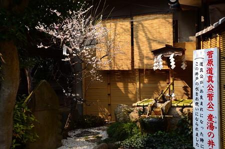 菅公産湯の井戸と梅