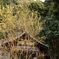 3月後半の大豊神社