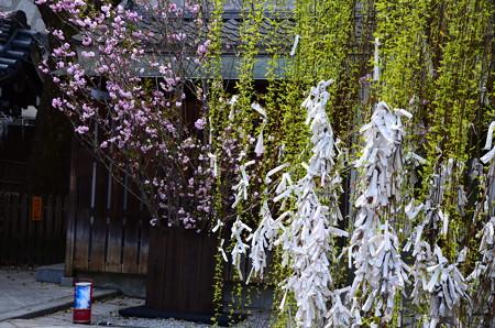桜と枝垂れ柳の六角堂