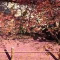 写真: ピンクの涙