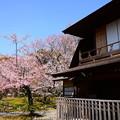 写真: 傍花閣と修善寺寒桜