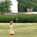 写真: 茶畑と少女