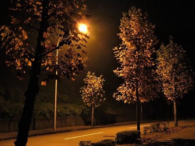 田舎の夜の街路樹_7625