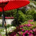 満開の庭園