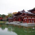 秋の平等院鳳凰堂2