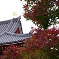 秋の平等院鳳凰堂4