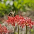 サンヨン で撮った 昆虫-1