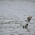 サンヨン で撮った 野鳥類-1