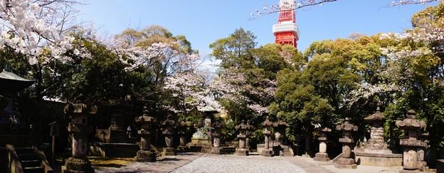 Photos: 徳川将軍家宝塔とサクラと東京タワー