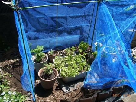 バタフライ用ガーデン2