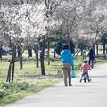 親子で散歩