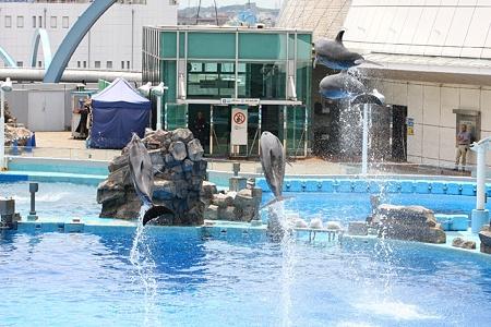 名古屋港水族館110624-イルカショー-18