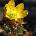 春の光、金仕立て^^