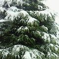 Photos: 雪降っとります@郡山
