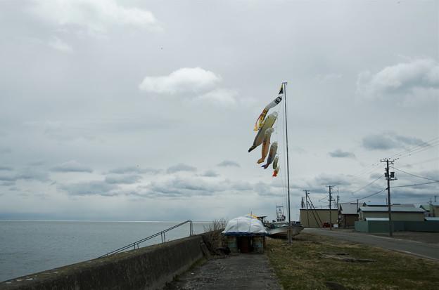 Photos: 港町の鯉のぼり