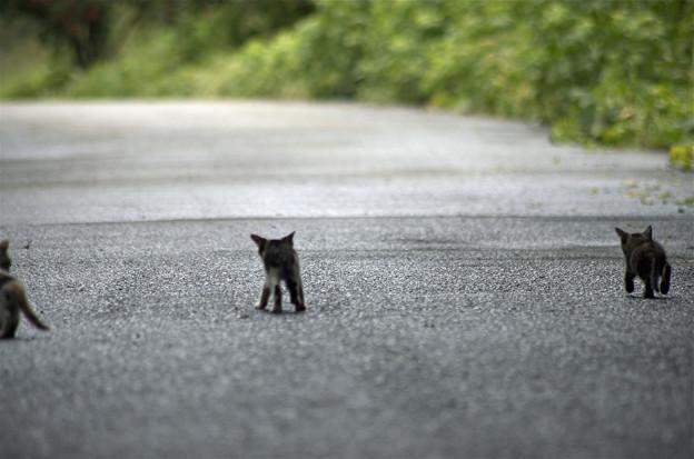 Photos: stray cats~三匹がゆく~