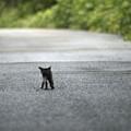 stray cats~三匹がゆく~