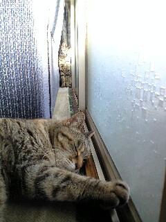 猫、ツーショット
