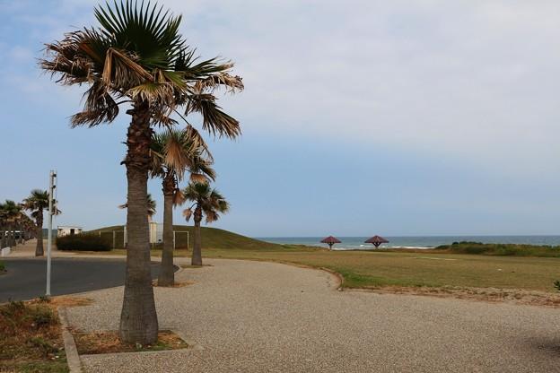 太平洋ロングビーチ沿いに位置する広場