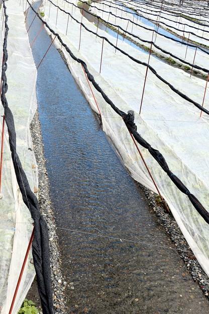 わさび田の水路