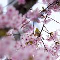 写真: 2017_03_11_妙林寺_DSC01400