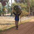 Photos: 頭で荷物を運ぶお母さん2015.02.07カンボジア
