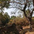 Photos: 森でのんびりの神様2015.02.07カンボジア