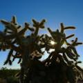 砂漠の珊瑚