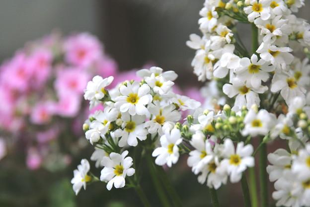 Photos: Spring time..