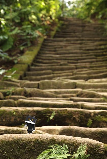 石段とMomoちゃんnyanboard...o^^o