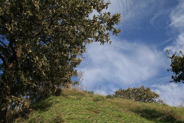 トロイ 遺跡の眠る丘