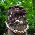 Photos: 神社の狛犬さん