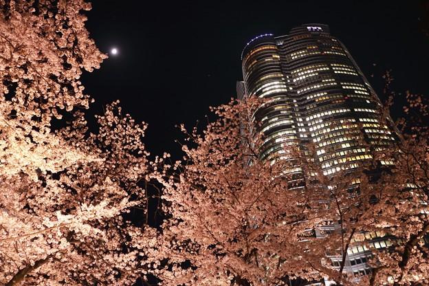 月夜に咲く