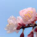 季節の便り Photo by iPhone