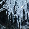 Photos: 氷柱1