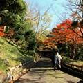 写真: 城山公園の紅葉