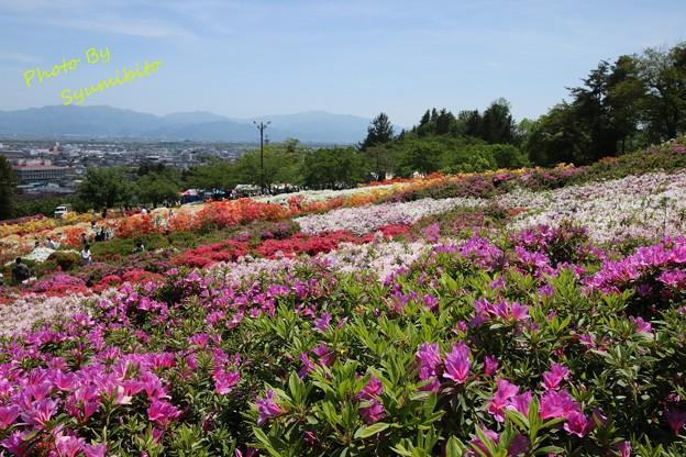Photos: 寒河江公園 つつじ園