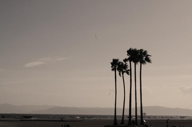 海に立つ五本の木