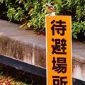 Photos: 看板息子w
