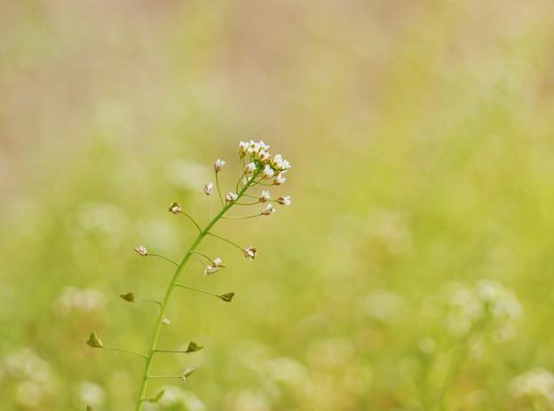 写真: 春風の中に