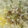 写真: 風を待つ