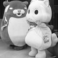 【モノクロ】ムッちゃん と ムサ尾の紹介