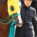 Photos: ★2017.1.7京都競馬場10Rラブミークン&柴田未崎騎手
