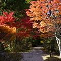 Photos: 紅葉のアーチ