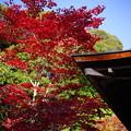 Photos: 鎮守拝殿横の紅葉