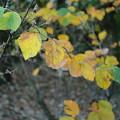 Photos: 秋の草木