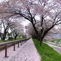 Photos: 花びらロード