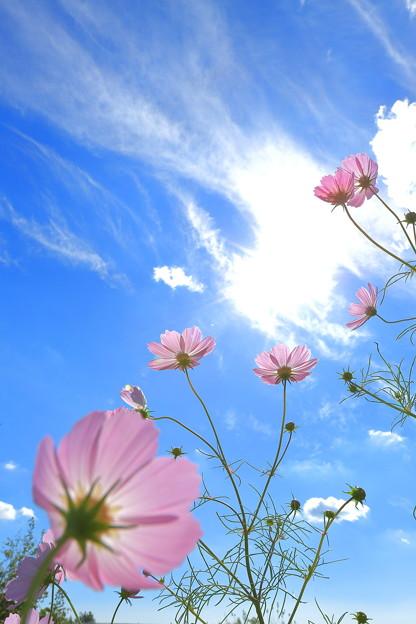 写真: 『天へ駆ける』